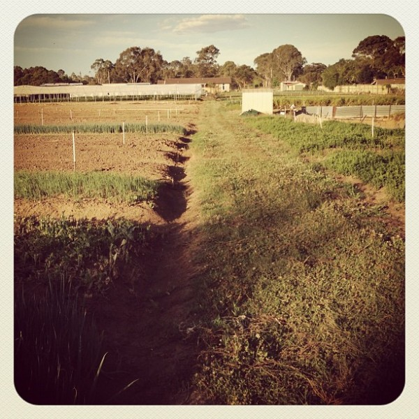 Out on a farm in Leppington